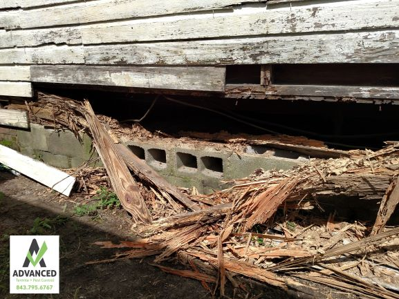 CL 100 extreme termite damage on a home